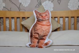 asc-1025-ginger-cat