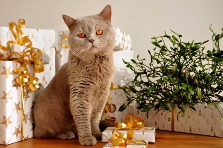 cat-1106804