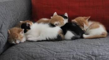 Kittens sleeping (2)