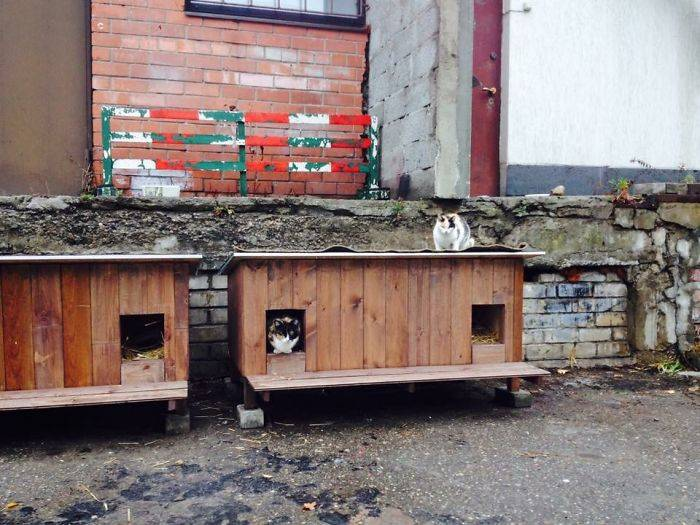 Outdoor-wooden-houses-for-homeless-cats-in-Riga-58b53912ed51c__700