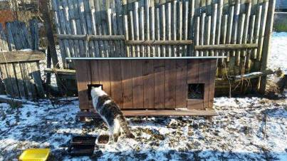 Outdoor-wooden-houses-for-homeless-cats-in-Riga-58b53bbf71cb9__700