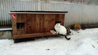 Outdoor-wooden-houses-for-homeless-cats-in-Riga-58b53f559e8c8__700
