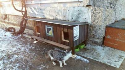 Outdoor-wooden-houses-for-homeless-cats-in-Riga-58b53f603ba42__700