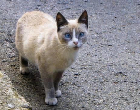 Secret-live-of-street-cats-of-Riga-5755e07be42f9-jpeg__880