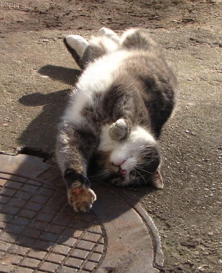Secret-live-of-street-cats-of-Riga-5755e08980f63-jpeg__880