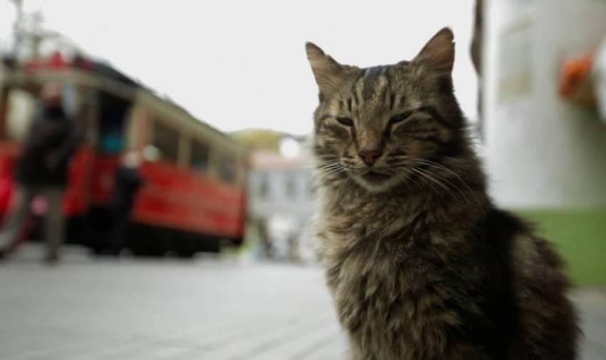 Anita Kelsey feline behaviour expert