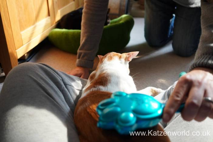 Katzenworld Hyper Japan0014