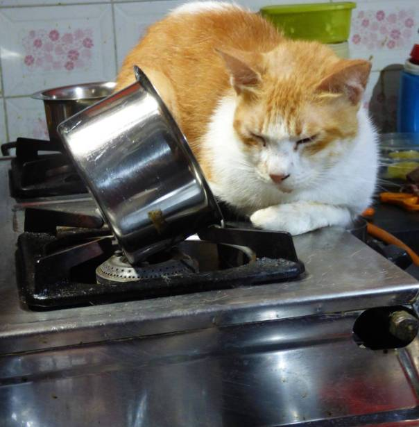 cat on the stove 4