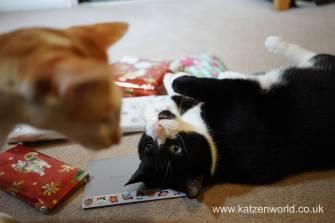 Christmas presents Secret Paw0018