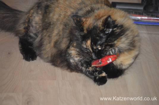 Katzenworld Louise story0005