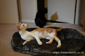 Katzenworld Mikki Bed0005