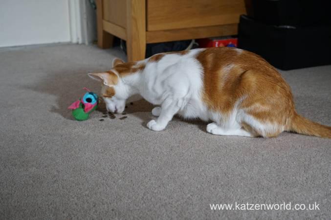 Katzenworld bowless feeder0011
