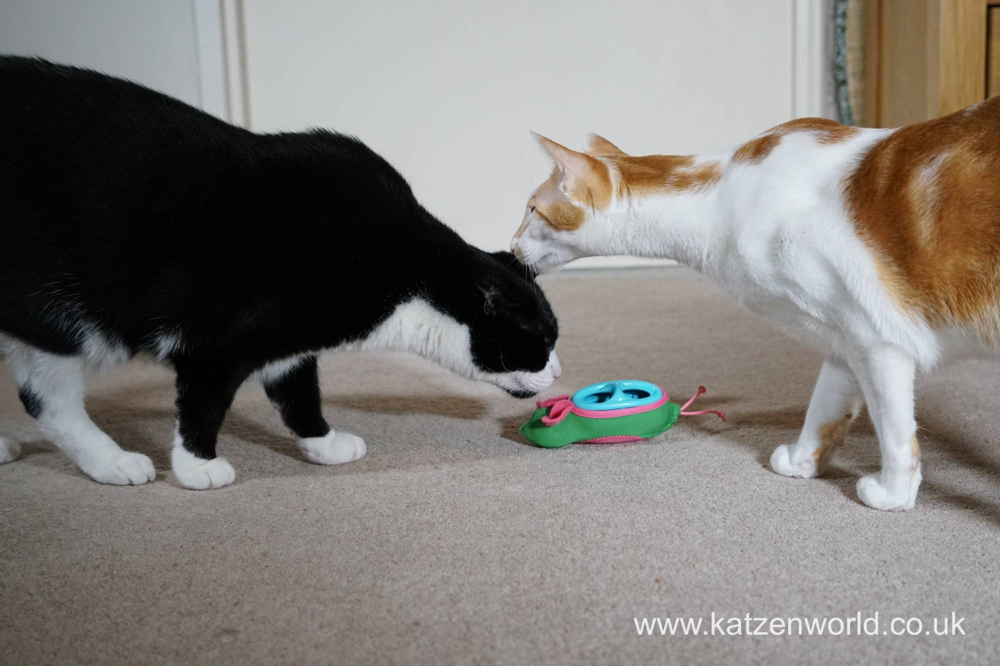"Oliver & Renegade: A ""cat fight"" over a mouse"