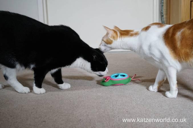 Katzenworld bowless feeder0020
