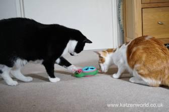 Katzenworld bowless feeder0023