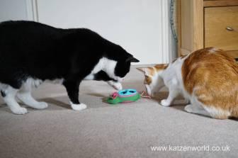 Katzenworld bowless feeder0024
