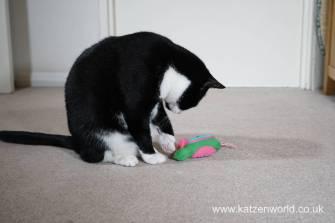 Katzenworld bowless feeder0029