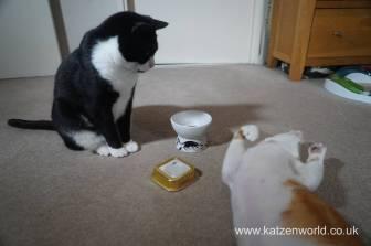Feline Cuisine Katzenworld0014