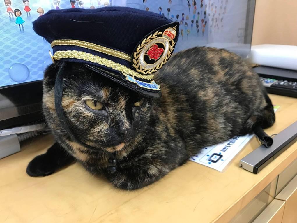 Best Tokyo Cat Cafes