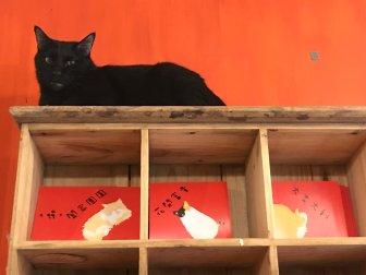 Cat Art Home-19