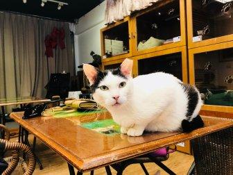 Music&Cats-12