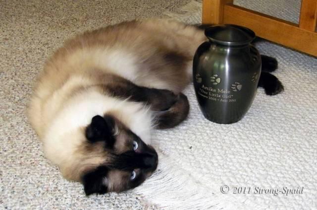 Cat-memorial