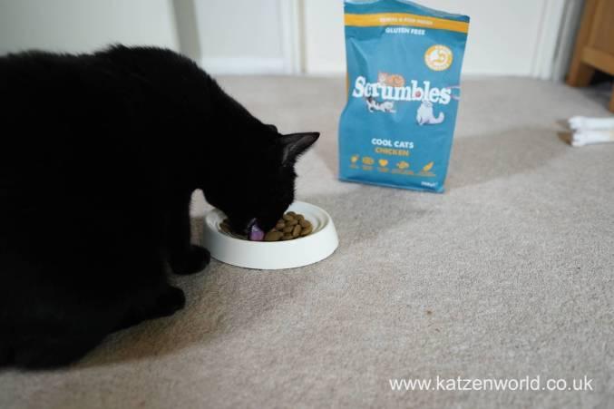 Feline Cuisine Katzenworld0010
