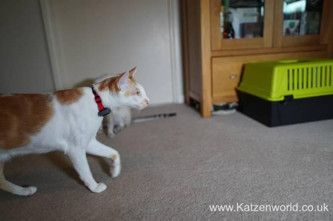 Katzenworld PetPointer0009