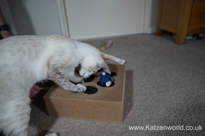 Katzenworld Whack-a-Mouse0008