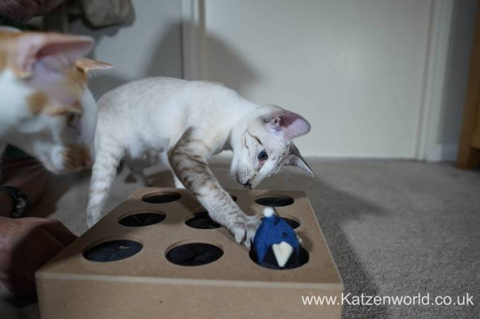 Katzenworld Whack-a-Mouse0014