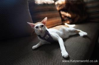 Katzenworld equi-stitch cat harness0000