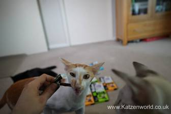Katzenworld webbox cat treats0011