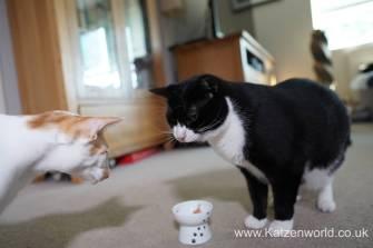 Katzenworld webbox cat treats0025