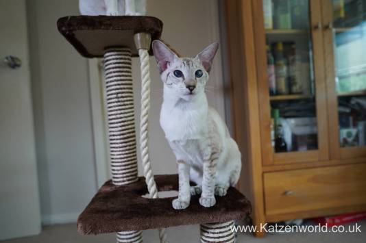 Katzenworld animed direct cat scratcher0017