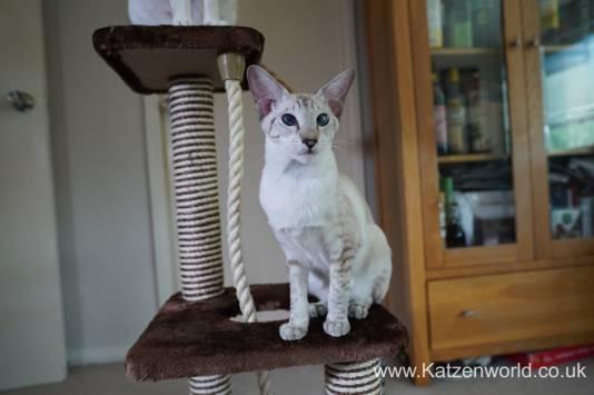 Katzenworld animed direct cat scratcher0017