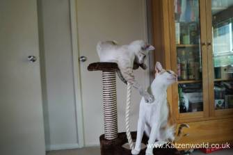 Katzenworld animed direct cat scratcher0020