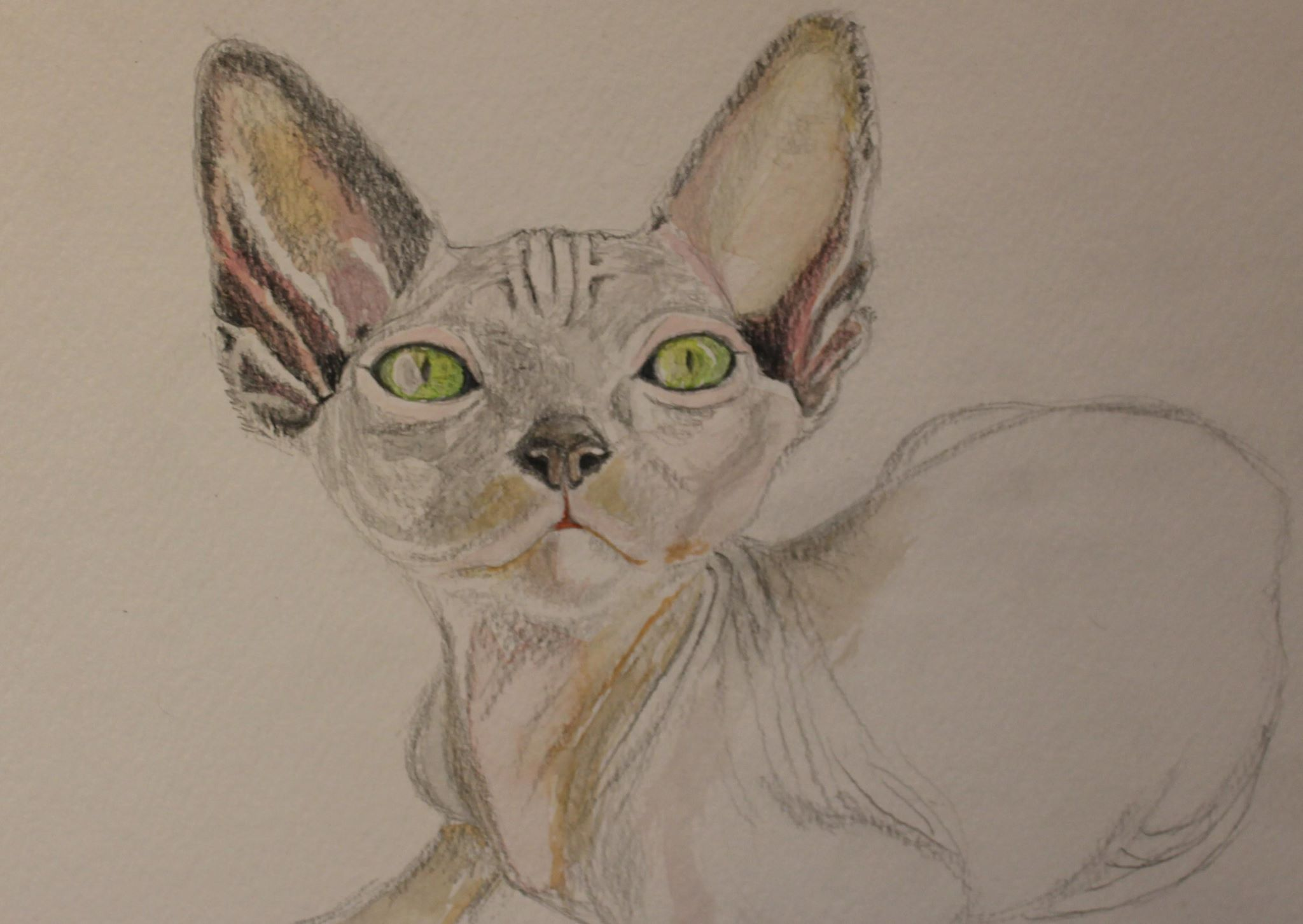 Friday Art Cat: Dexter the Sphynx Kitten