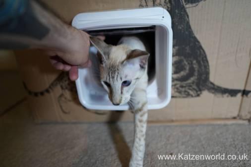 Katzenworld SureFlap0013