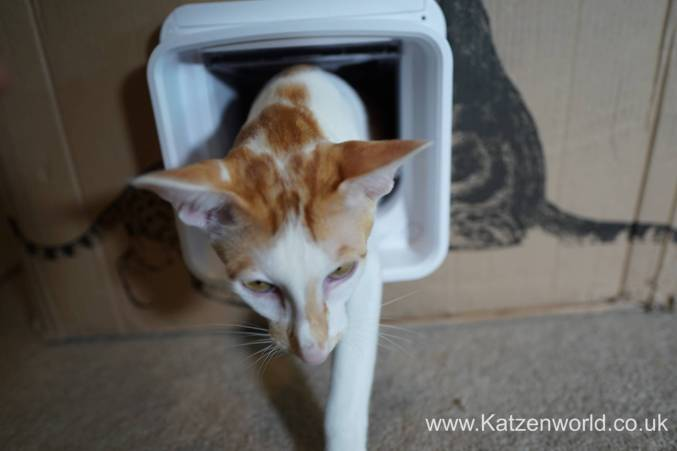 Katzenworld SureFlap0016