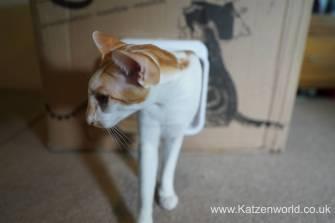 Katzenworld SureFlap0017