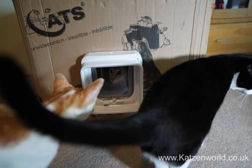 Katzenworld SureFlap0022