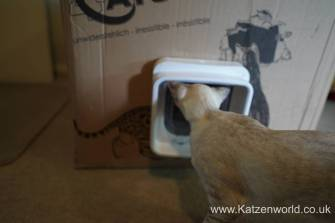 Katzenworld SureFlap0025