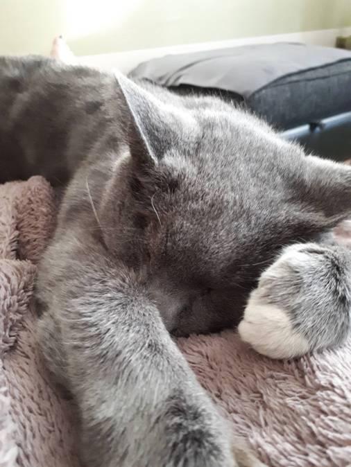 Maximus snoozing