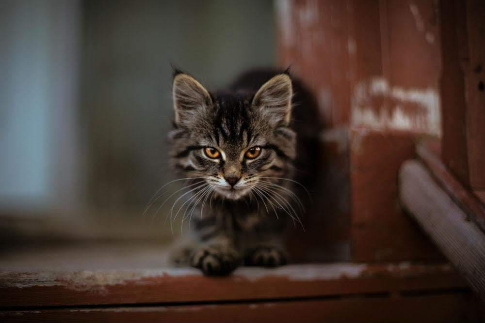 Feral Cats in the UK – Adorable or a Danger?