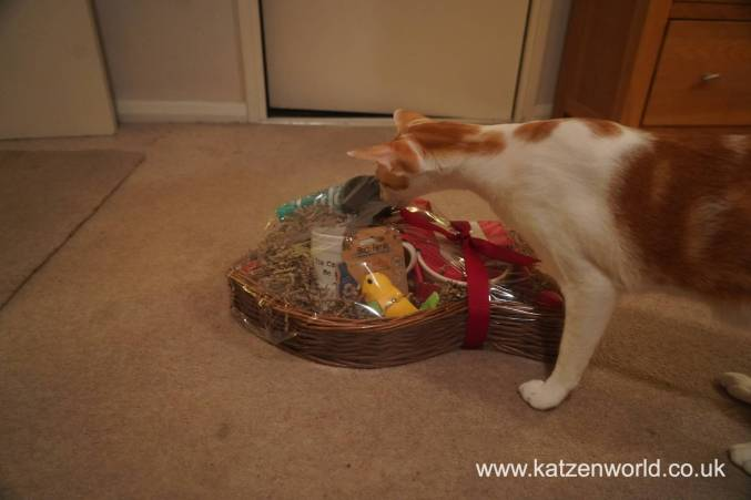 Christmas Guide Katzenworld0012
