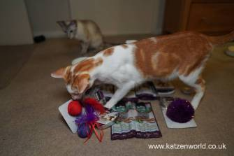 Christmas Guide Katzenworld0020