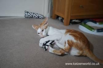 Feline Cuisine Katzenworld0005