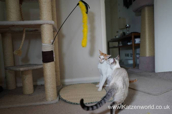 Katzenworld scratch tree cuff0006