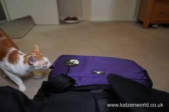 Sleepypod Katzenworld0001