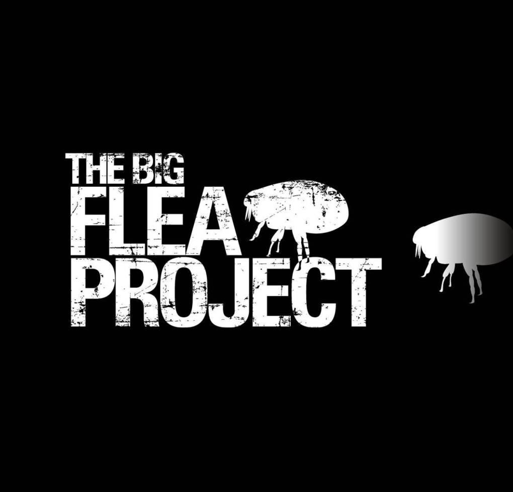 The Big Flea Project Logo